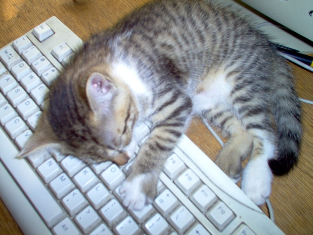 Cat on a Keyboard by Anelis